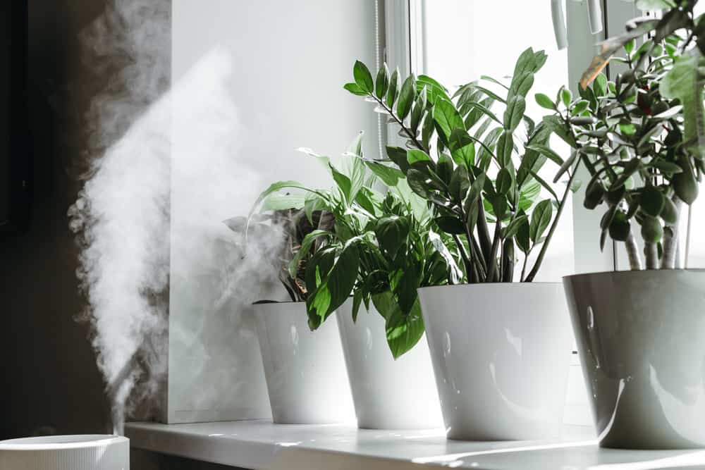How-to-Use-Humidifier-for-Houseplants