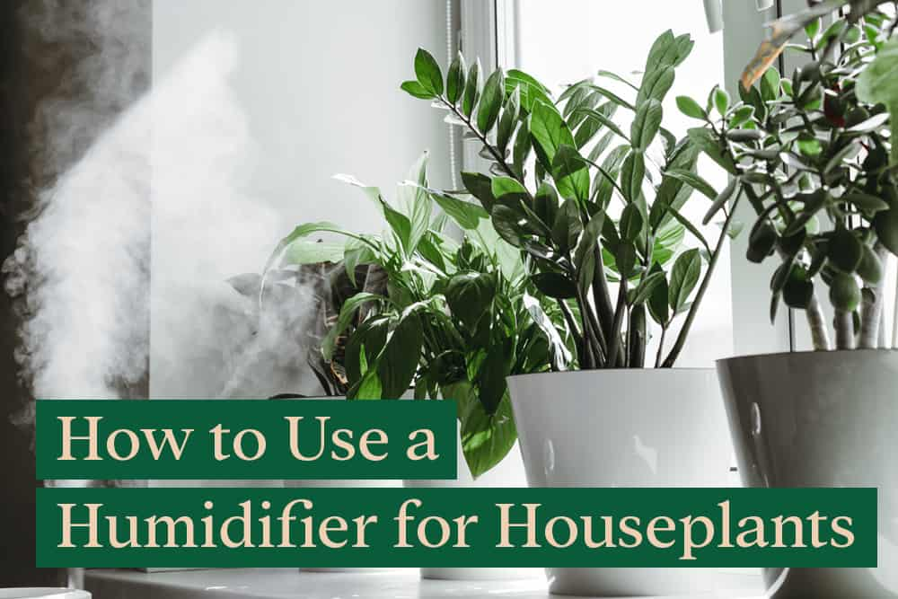 How to use a humidifier for houseplants