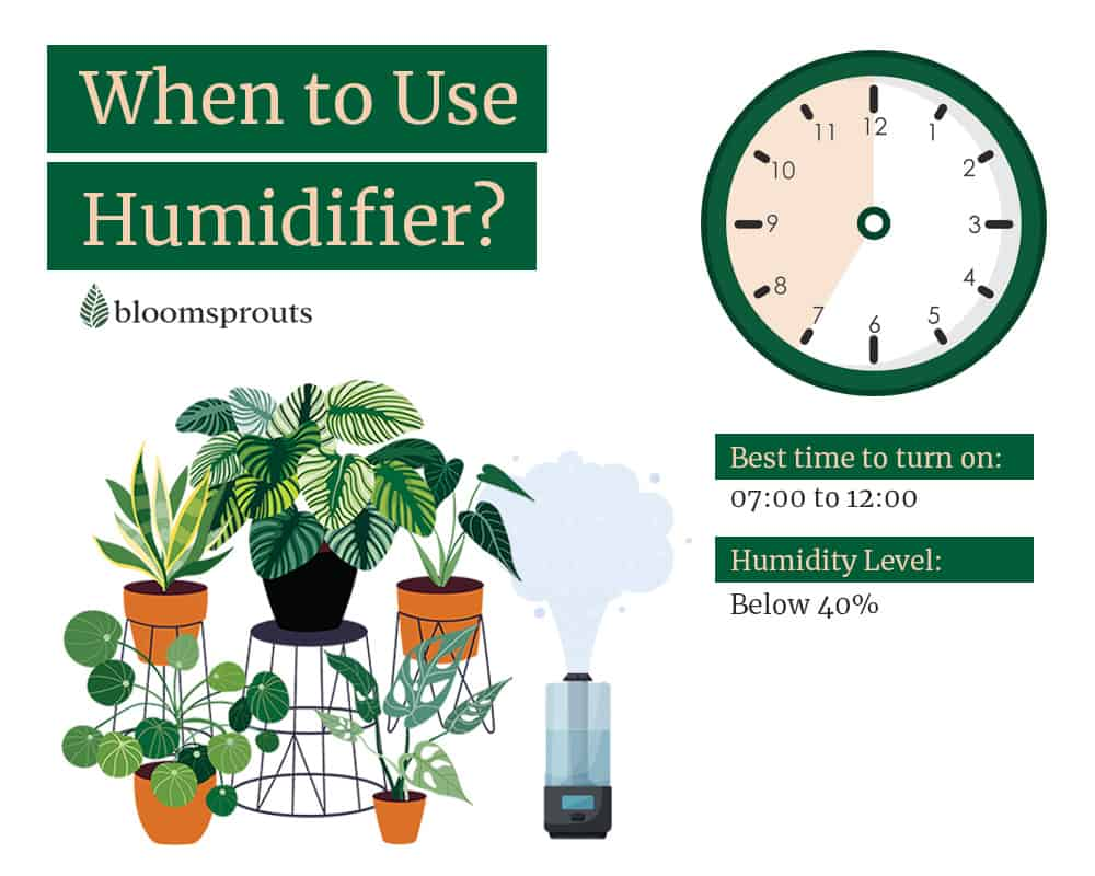 When is the best time to turn on humidifier for houseplants: Between 7 am to 12 pm or if the room humidity drop below 40%