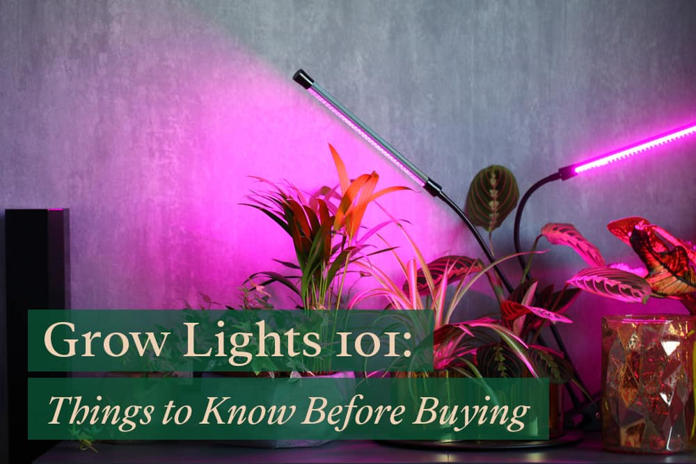 Grow lights for houseplants: Everything you must know before buying one