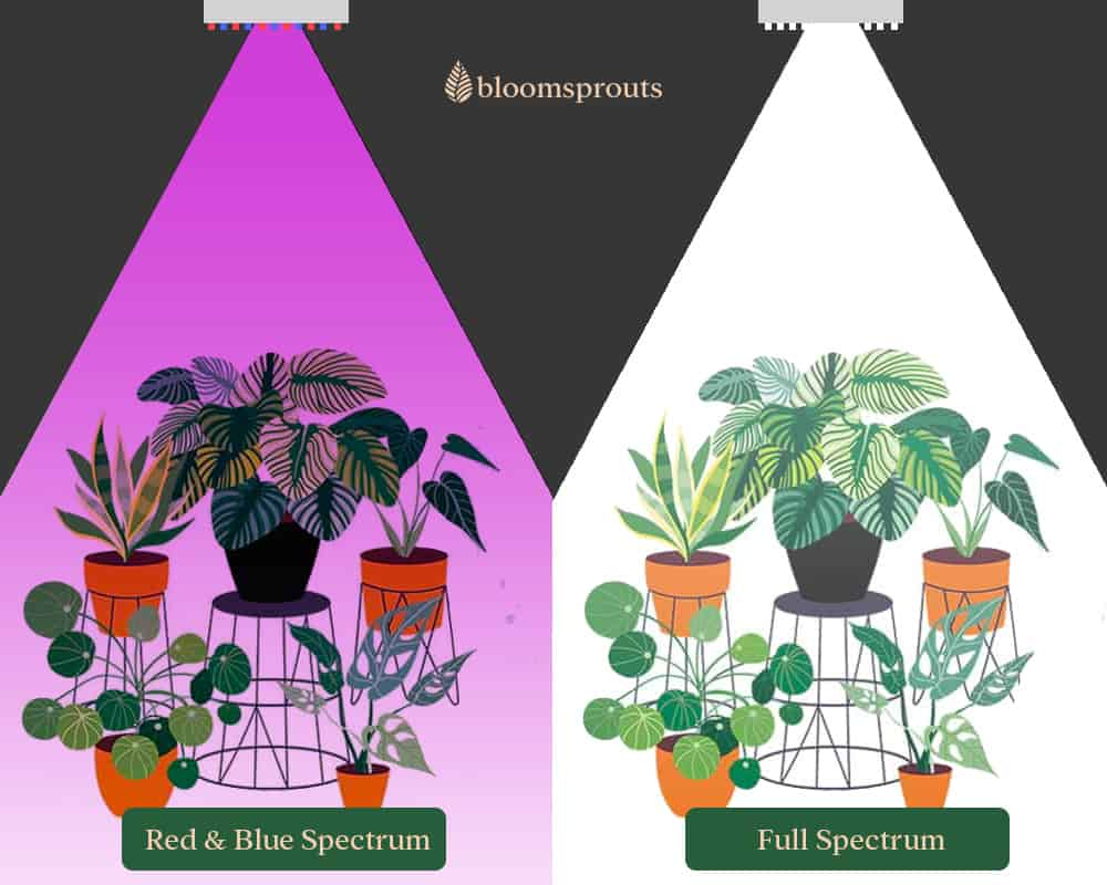 Difference between Red & Blue vs Full spectrum growlights