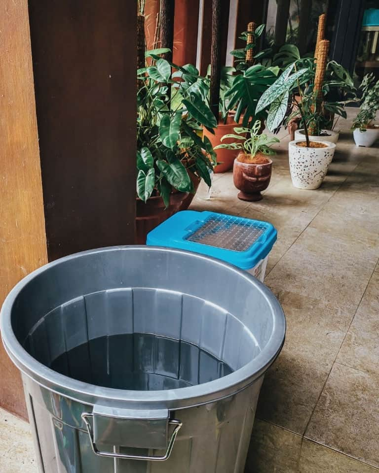 I collect rainwater which I now use to water all my houseplants