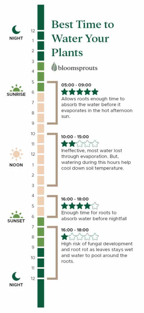 best time to water plants infographic