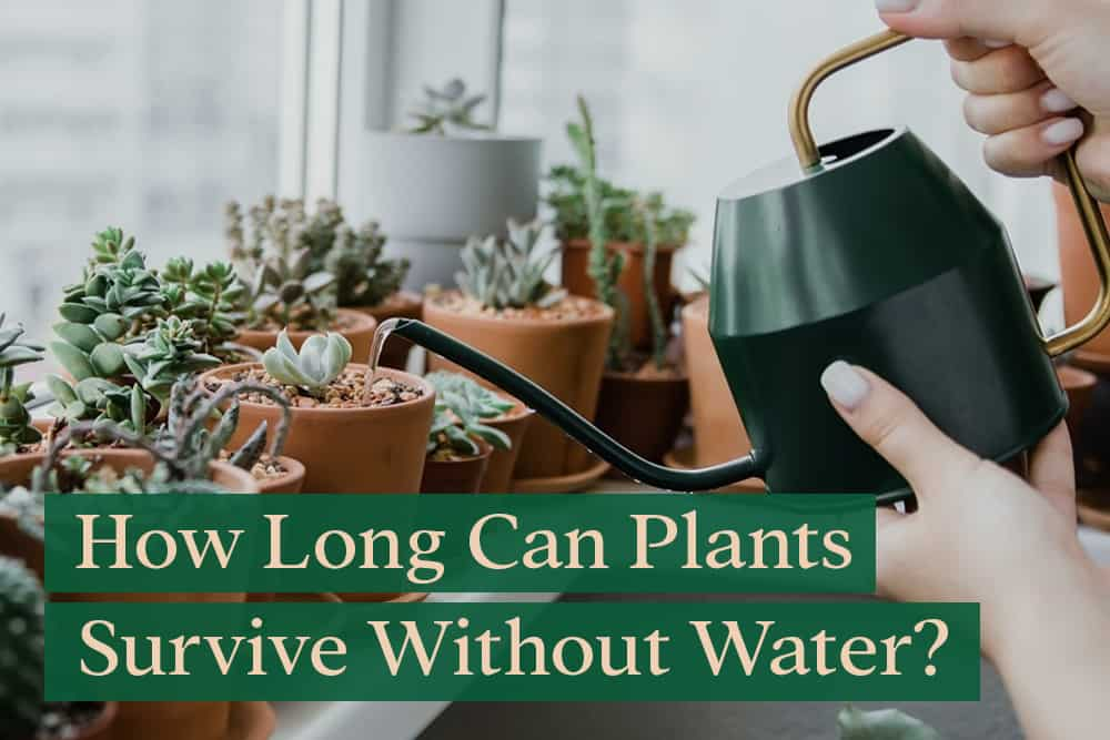 How Long Can Plants Go Without Water